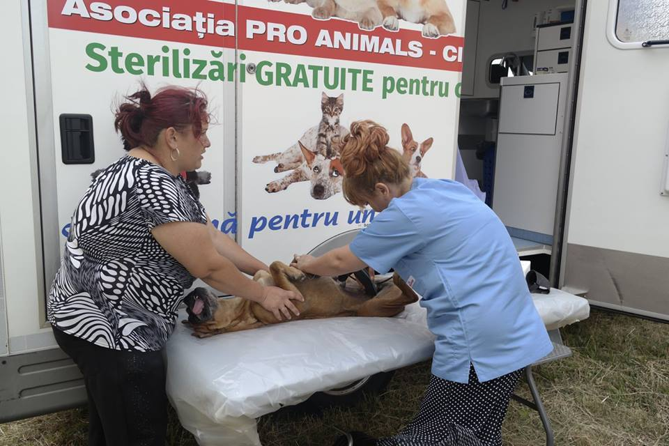 'Give a chance' Mobile Sterilization Clinic in use in Romania, July 2016 © Pro Animals Finland ry